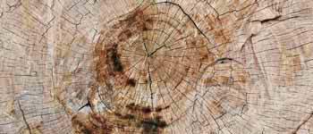 Arnaud jagoury- Restauration pierre et bois